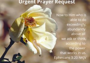 Urgent Prayer Request meme